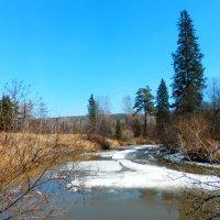 Весна на реке :: Владимир Звягин