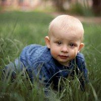 Затаившийся в траве :: Екатерина Стопкина