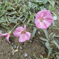 Проснулся маленький цветок... :: Galaelina ***
