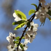 В ожидании весны :: Лидия (naum.lidiya)