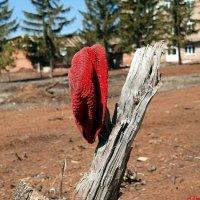 Красная Шапочка шла по лесу, где росли грибы, а потом она не смогла отличить бабушку от волка..:) :: Андрей Заломленков