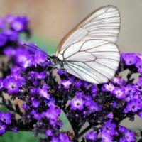 Бабочка :: Ольга (crim41evp)