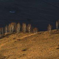 В лучах вечернего солнца 3 :: Сергей Жуков