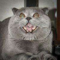 Кот сердится :: Владимир Щербаков