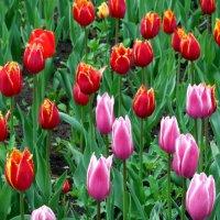 Весна! :: Надежда