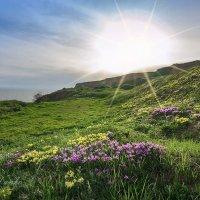 В лучах цветущая поляна... :: Елена Данько
