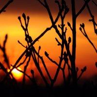 Pыжий закат :: Анастасия Фомина