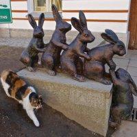 зайцы Заячьего острова и кошка, гуляющая сама по себе :: Елена