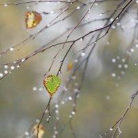 Осенний мотив :: igor.rr