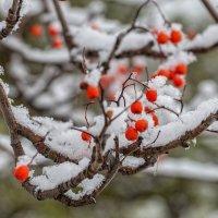 Скоро зима :: alteragen Абанин Г.