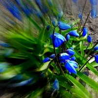 Аромат весны. :: Мила Бовкун