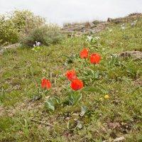 тюльпаны :: vladimir polovnikov