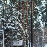 Зимняя дорога. :: Serge Lazareff