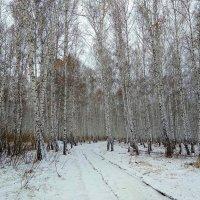Снег в апреле. Капризы погоды... :: Татьяна Котельникова