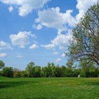 Весна на белом свете... :: Galina Dzubina