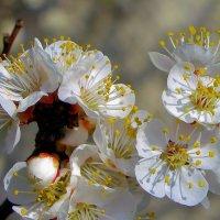 Вдохните глубже аромат весенний. :: Валентина ツ ღ✿ღ