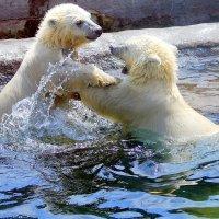 Игры в зоопарке :: Ольга (crim41evp)