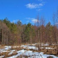 Хорошо в лесу в апреле. :: Галина .