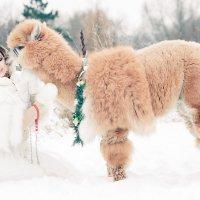Зимняя сказка :: Ivan Karunov