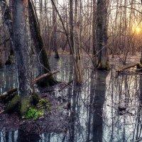 Лес в апреле :: Dmitriy Martynenko