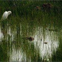 На болоте. :: Leonid Korenfeld
