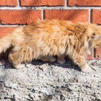 Желтый кот :: Elena Wise