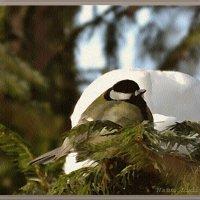 Из жизни птиц :: Лидия (naum.lidiya)