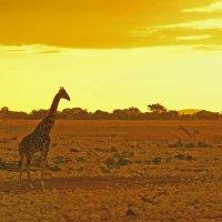 Африканское Утро. :: Jakob Gardok