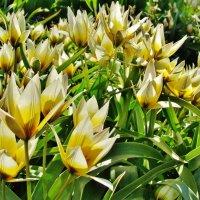 Радость майского цветения :: Aida10