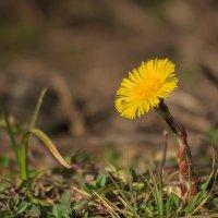 Скромное очарование весны :: Наталья Кузнецова