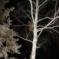 В ночном лесу :: Вячеслав & Алёна Макаренины
