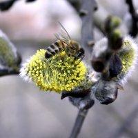 сбор нектара :: лиана алексеева