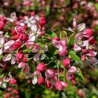 Весеннее цветение.. :: igor G.