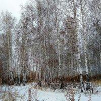 Снег в апреле :: Татьяна Котельникова