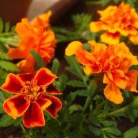 Цветы в апреле... :: Тамара (st.tamara)