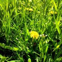 Природа. Весна. :: Татьяна Королёва