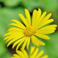 Весенние цветы :: Игорь