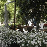 Летнее кафе :: Алёна Савина