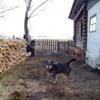 А у нас во дворе... :: Светлана Рябова-Шатунова