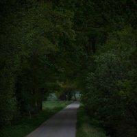 Дорога через лес :: Eduard Mezker