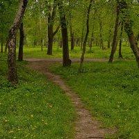 Гуляя по парку :: Николай Саржанов