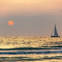 Золотое море :: Tatyana Belova