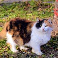 Разноцветный кот :: Ольга (crim41evp)