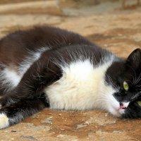 Што-то я устал сегодня целый день за кошками бегать..:) :: Андрей Заломленков