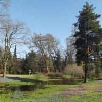 Ботанический сад :: Вероника