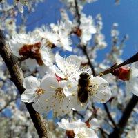 Весна :: Татьяна Королёва