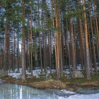 Весна :: Евгений Астахов