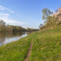 Весна на реке. :: Валентина Домашкина