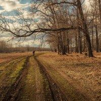 Велопрогулка по весеннему лесу :: Вадим Sidorov-Kassil