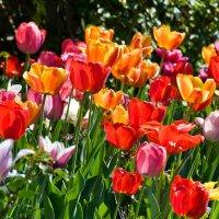 Весна салютует... :: Наталья Костенко